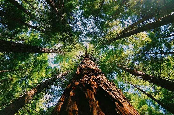 С грижа за екологичните предизвикателства