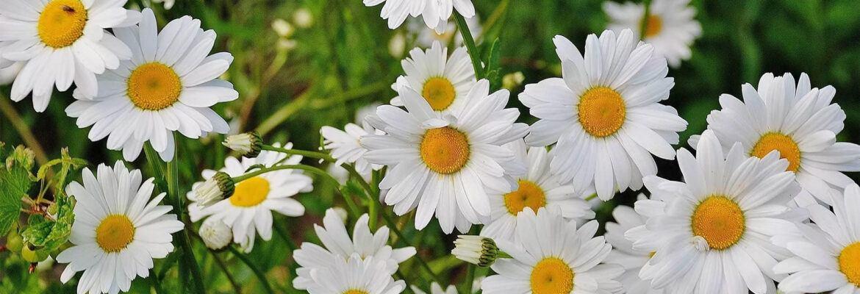 Цветята са част от природата